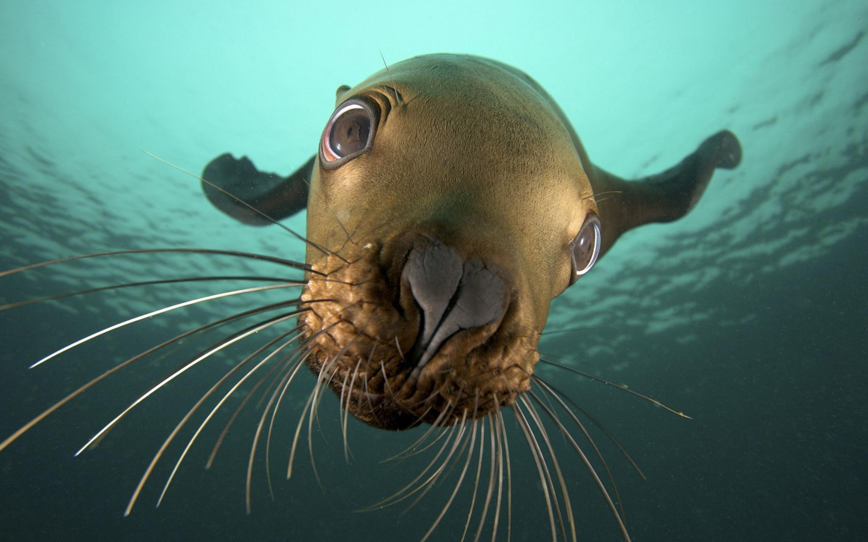 Seal camera