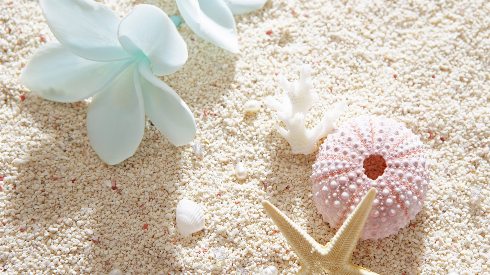 Seashell HD Wallpaper