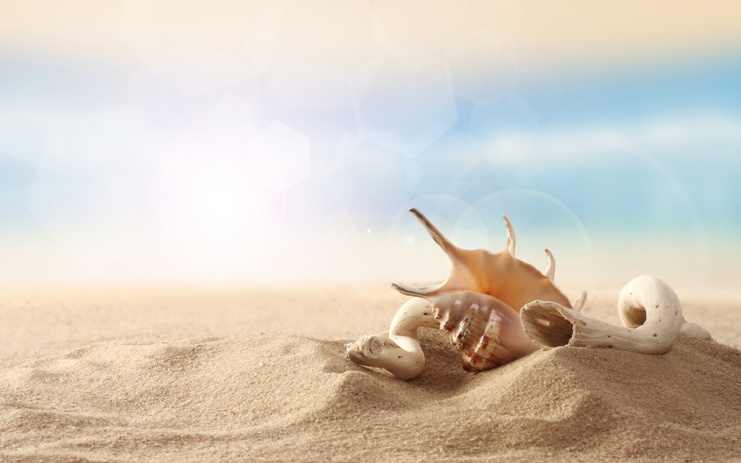 Seashell Sand Wallpaper