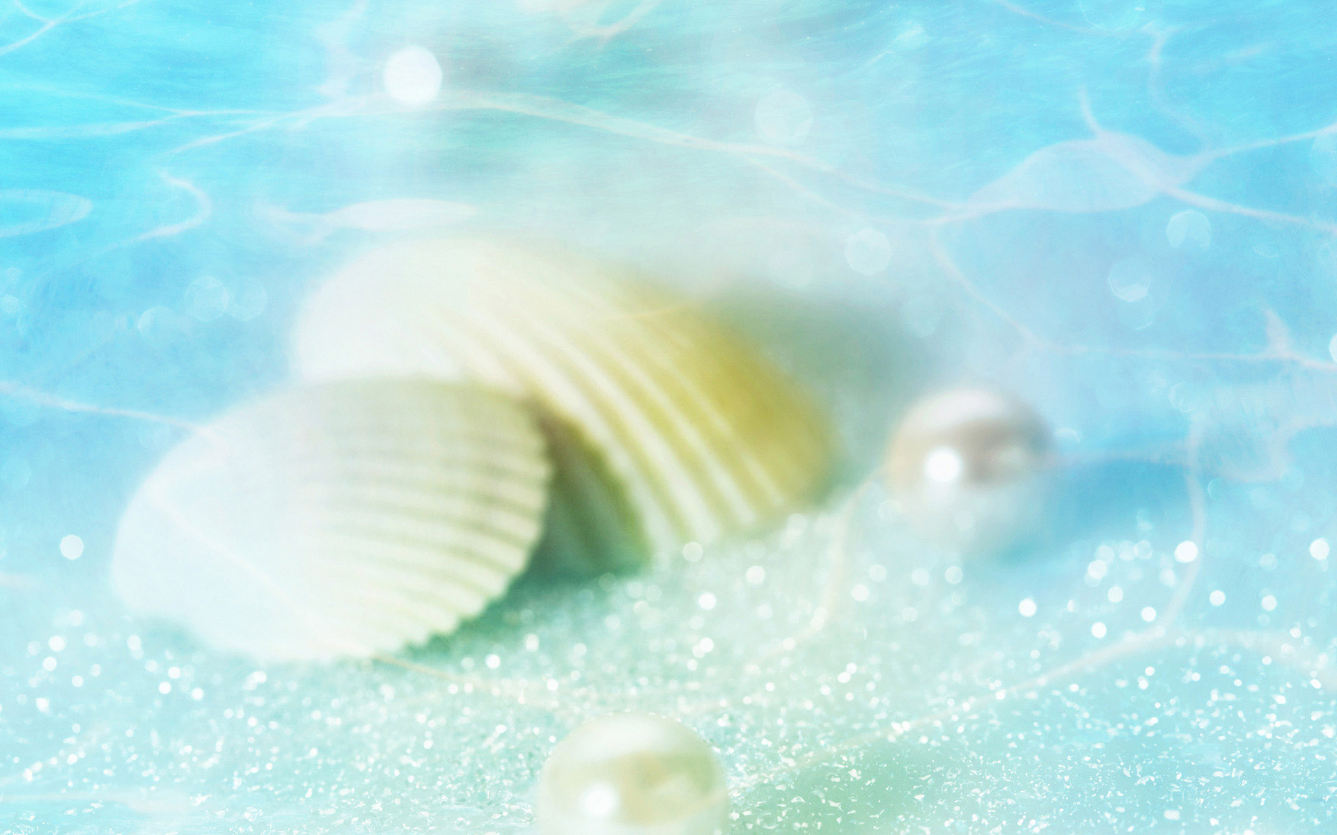 Seashell Backgrounds Wallpapers Wallver