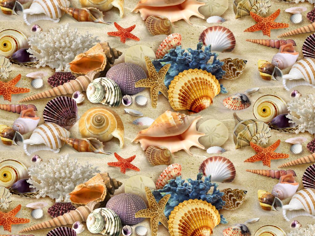Seashell HD Wallpapers-12
