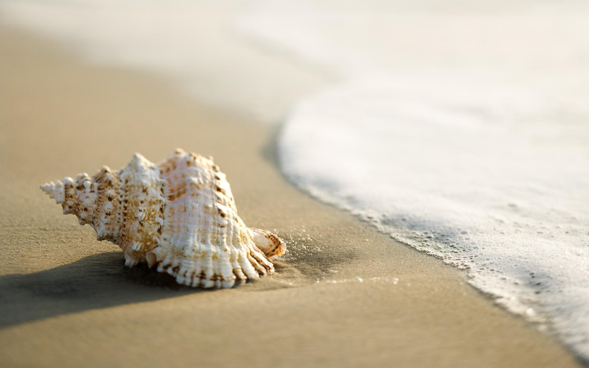 "Download the following Free Seashell Wallpaper 25193 by clicking the orange button positioned underneath the ""Download Wallpaper"" section."