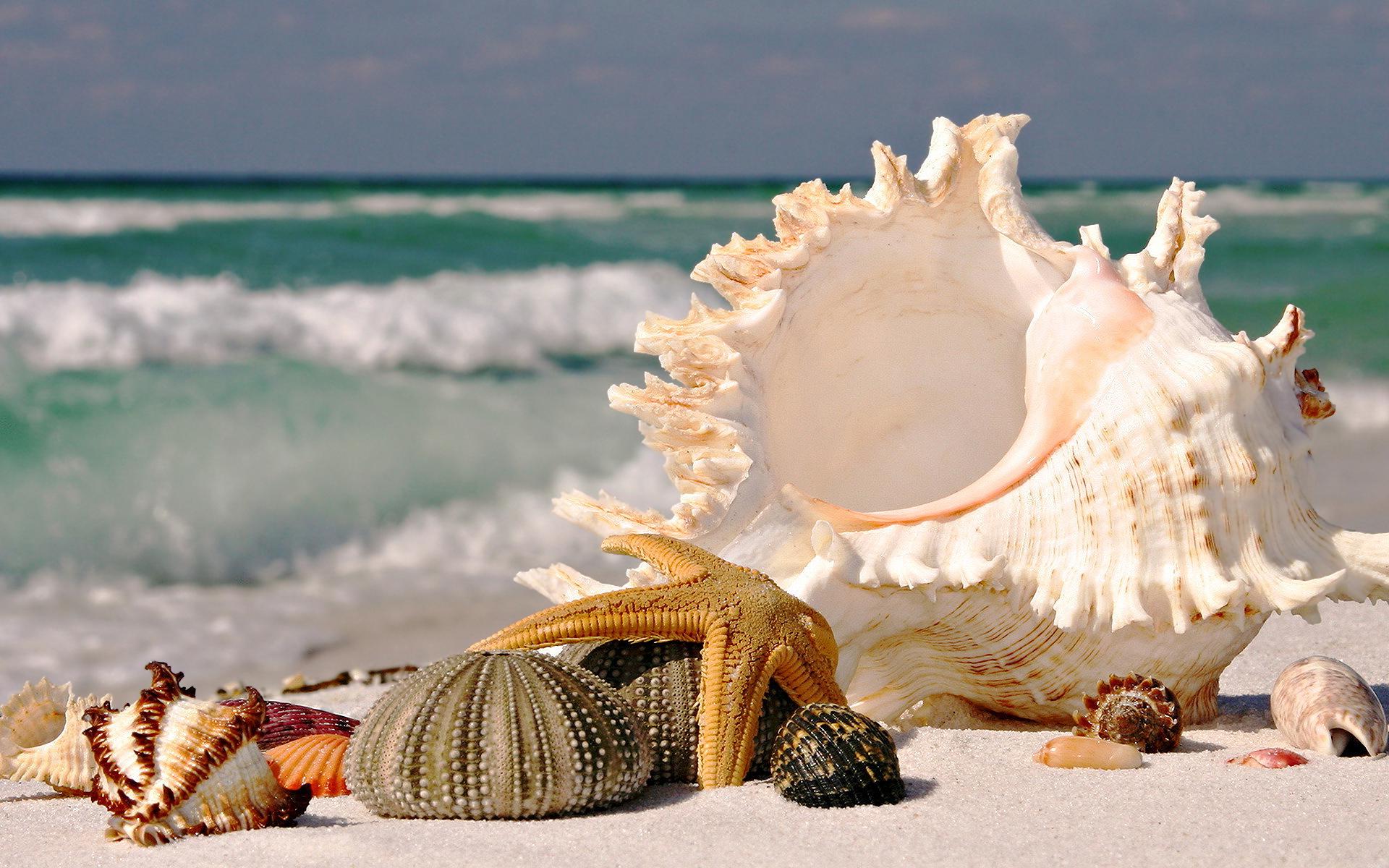 Beach seashells