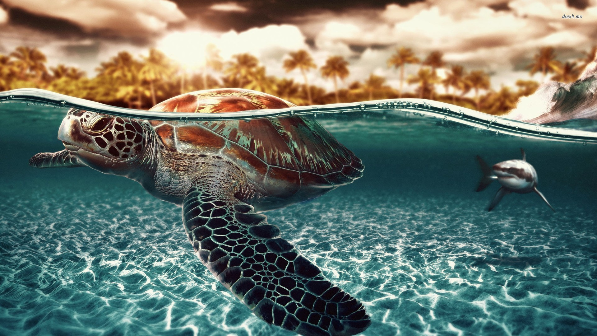 ... Sea turtle and shark wallpaper 1920x1080 ...