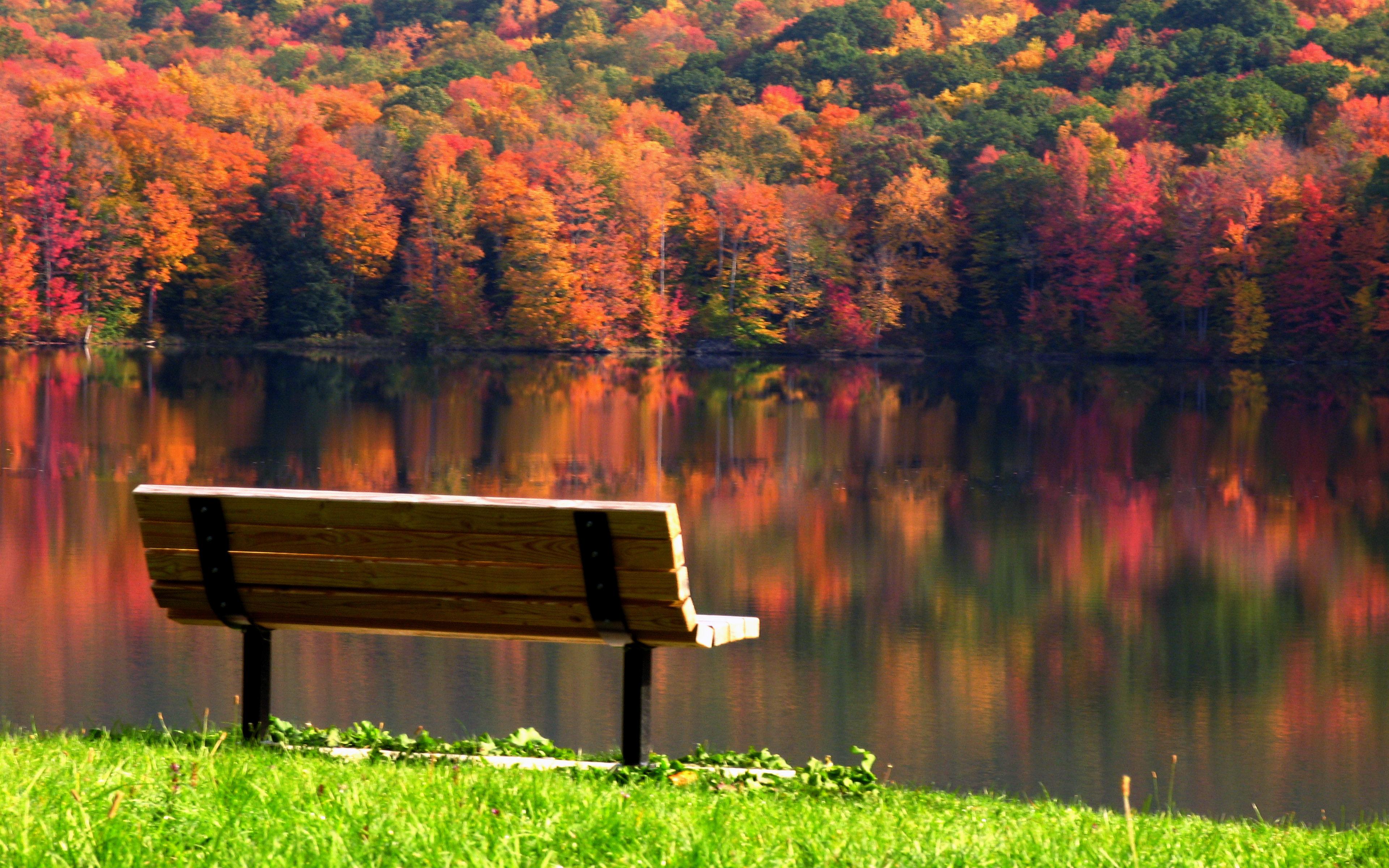 Serene Bench