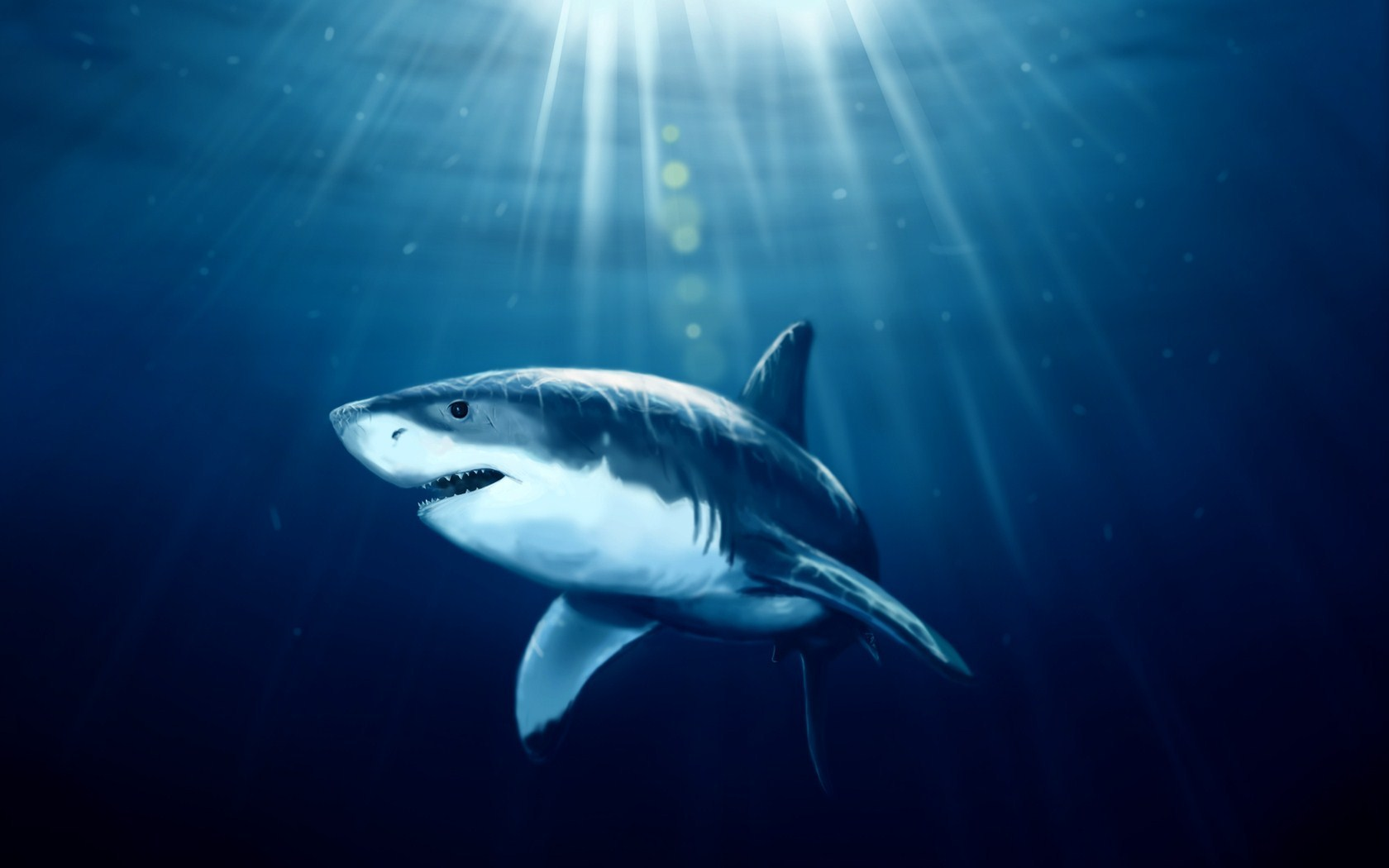 Shark Fish Underwater Art HD Wallpaper