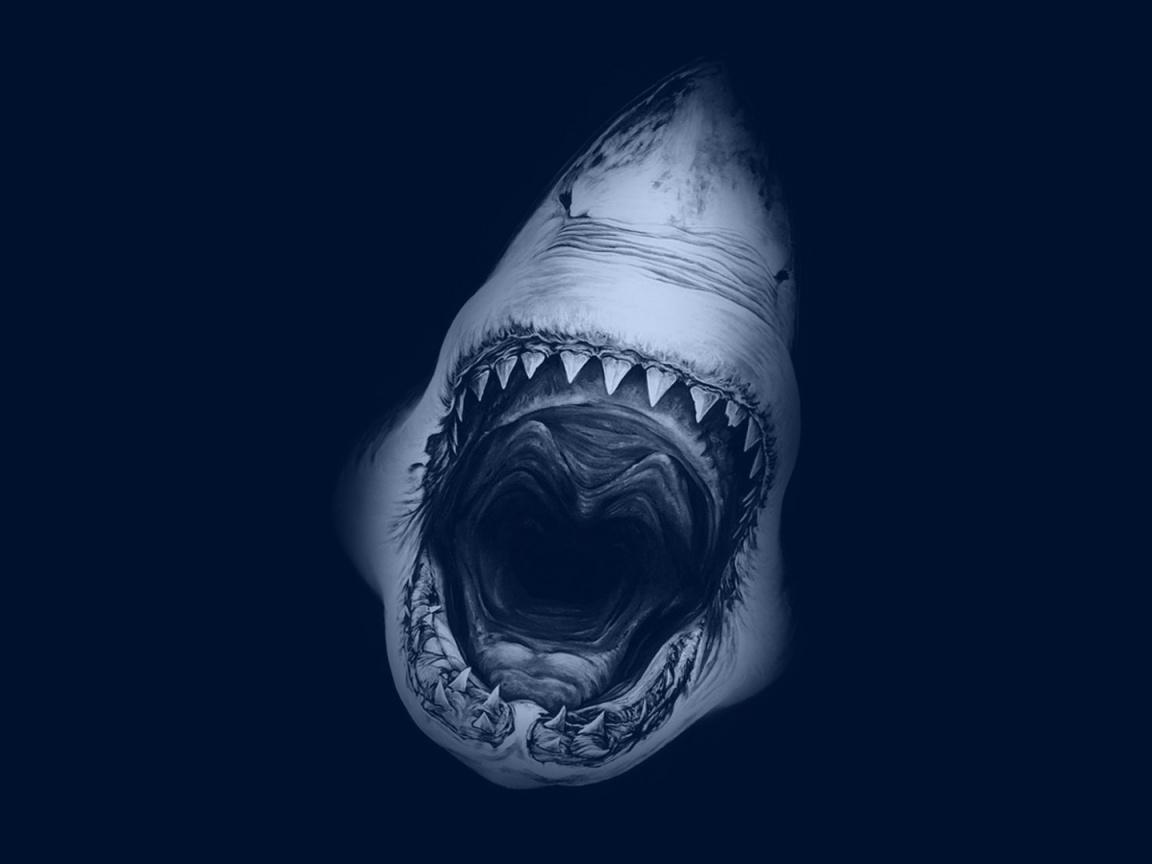 Great White Shark Cartelthemes Desktop Wallpaper