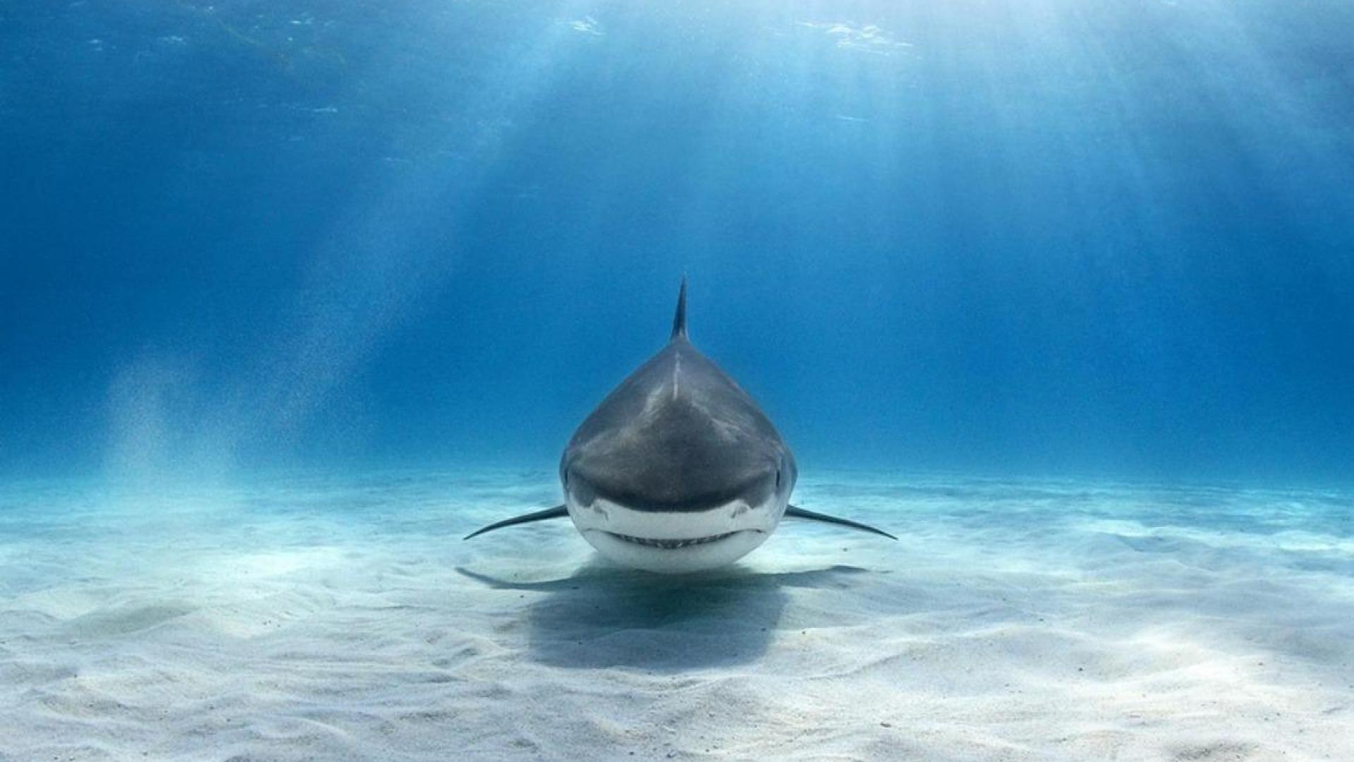 Shark Wallpaper Hd Wallpapers in Animals Imagescicom Xpx