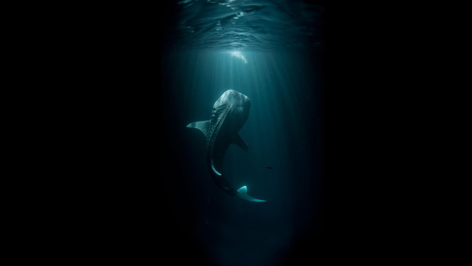 Whale Shark Wallpaper #62760 - Resolution 1920x1080 px