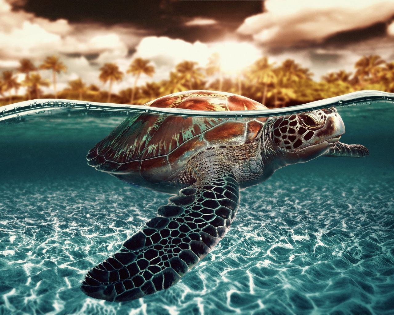 Description: The Wallpaper above is Seaturtle Shark Wallpaper in Resolution 1280x1024. Choose your Resolution and Download Seaturtle Shark Wallpaper