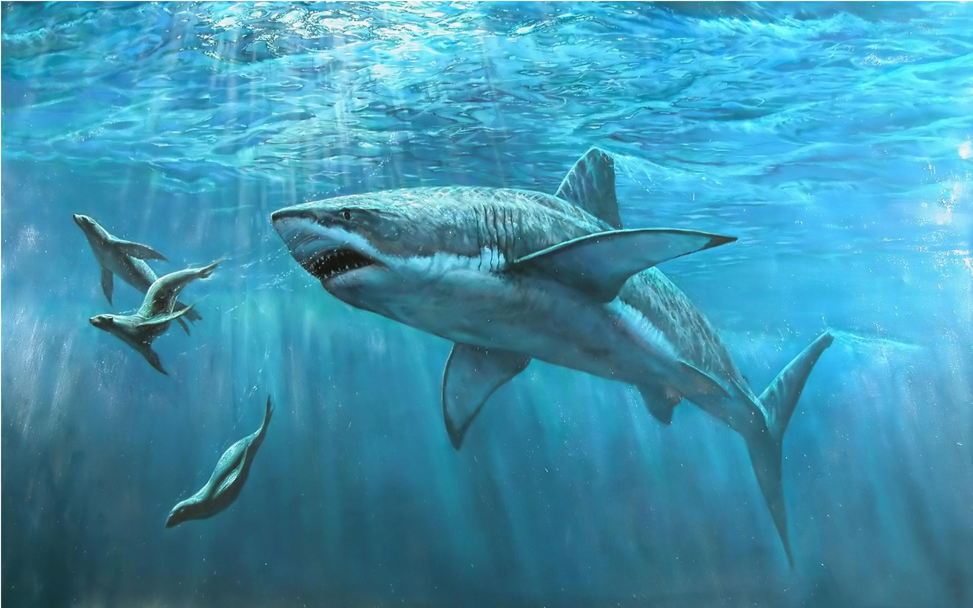Shark Wallpaper 6551 Animal Widescreen