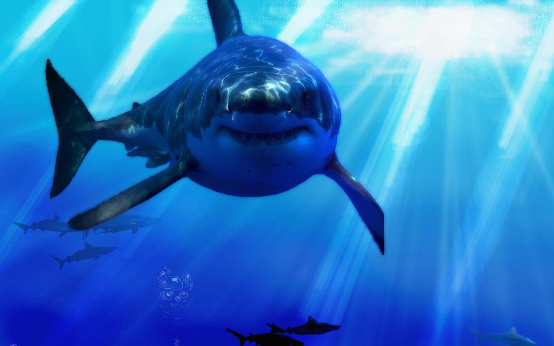 Views: 1281 Shark Wallpaper 1005