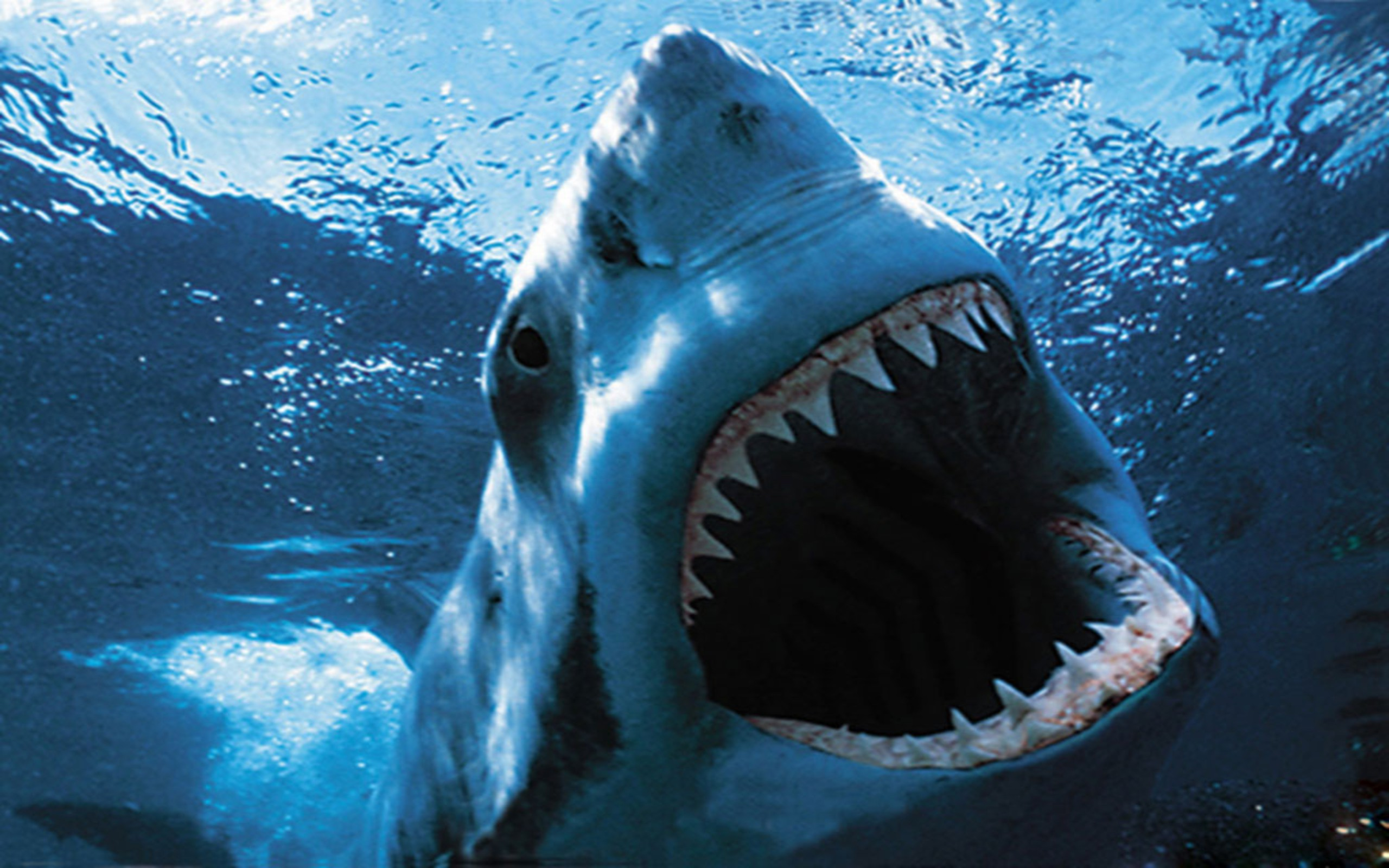 DOWNLOAD: Shark Wallpaper free picture 2560 x 1600