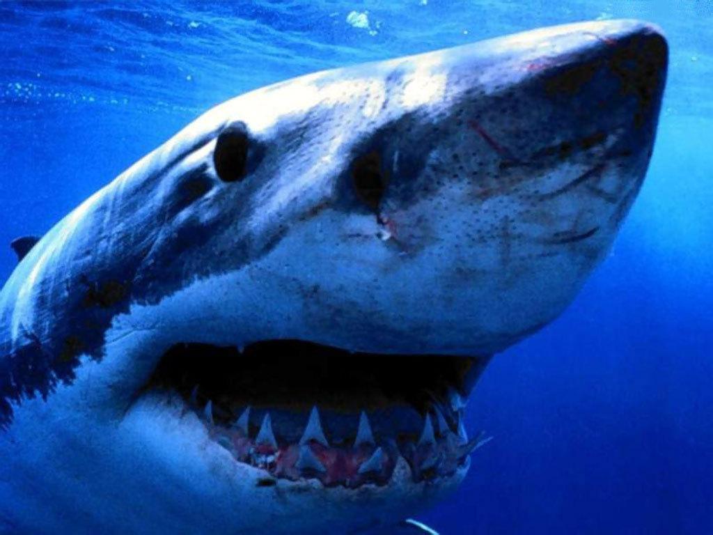 Sharks ~♥ Shark ♥ ~