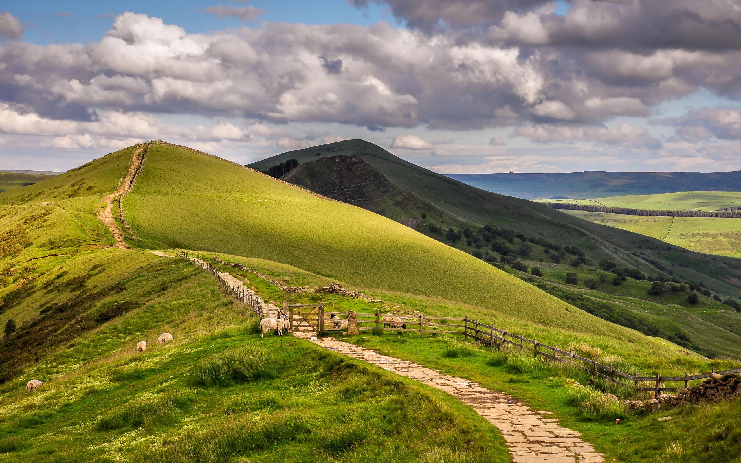 Sheep landscape england