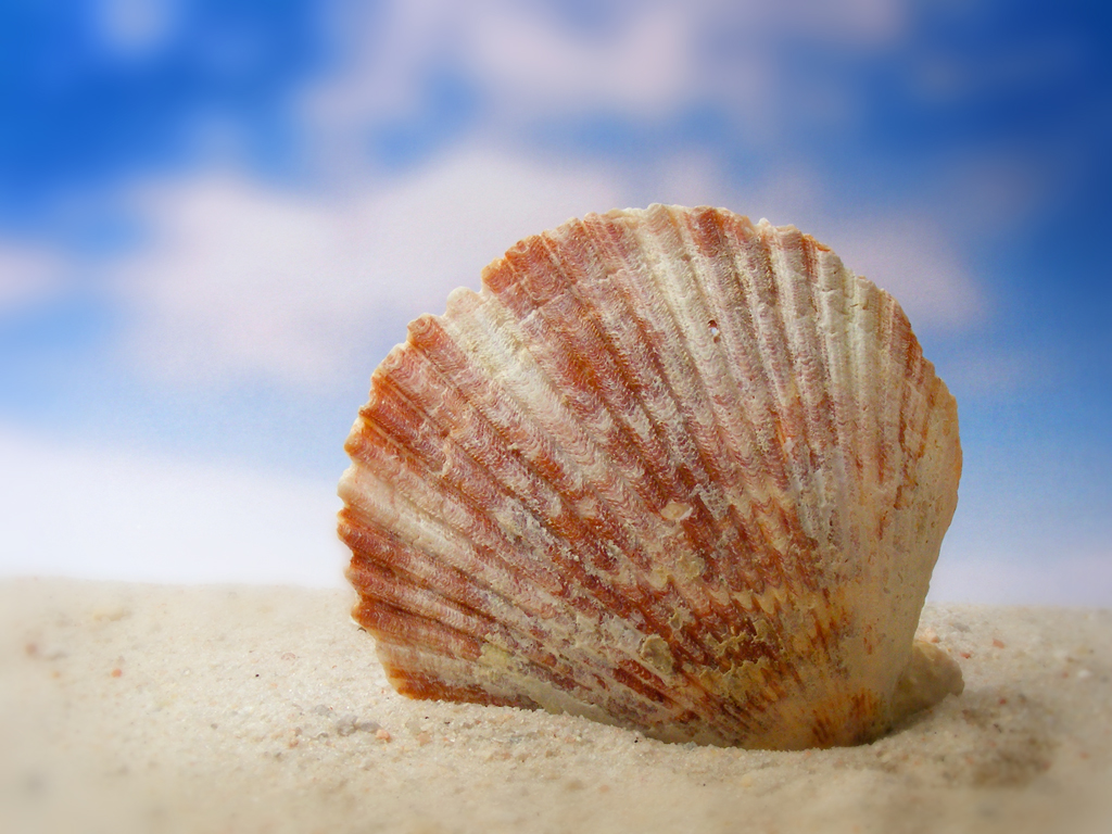 I love Sea Shell