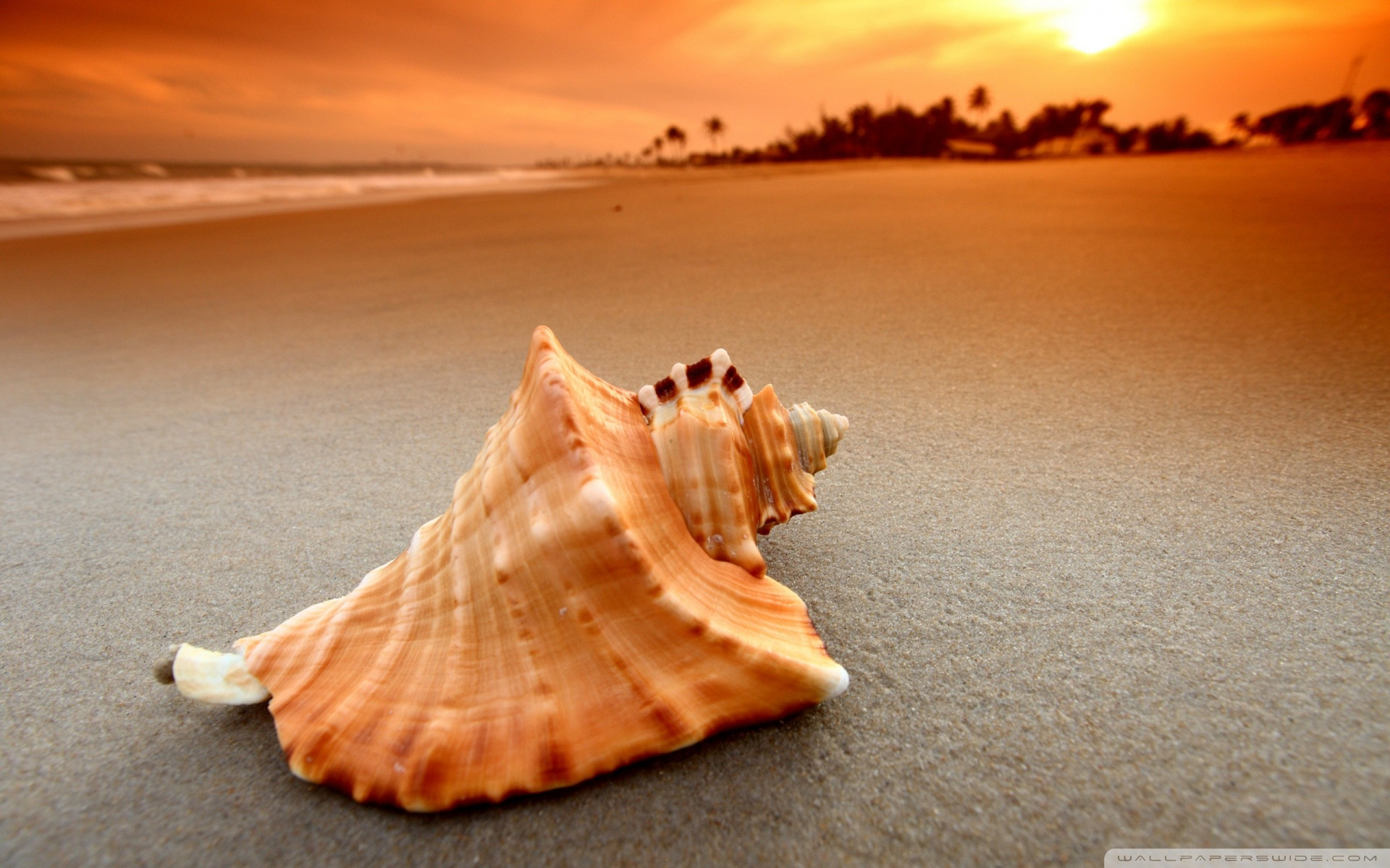 Shell Wallpaper HD