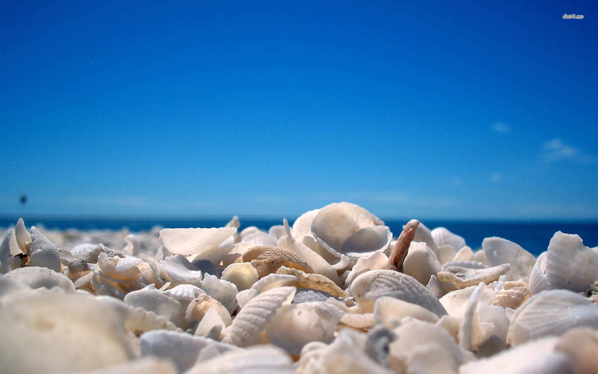 Shells Wallpaper