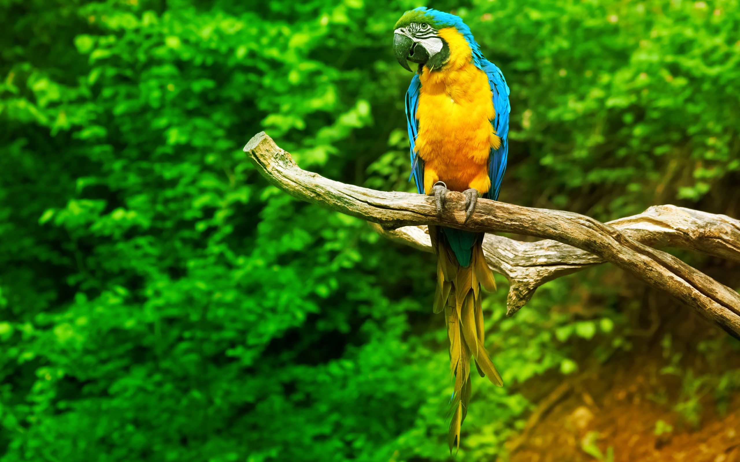 Sitting Macaw Parrot