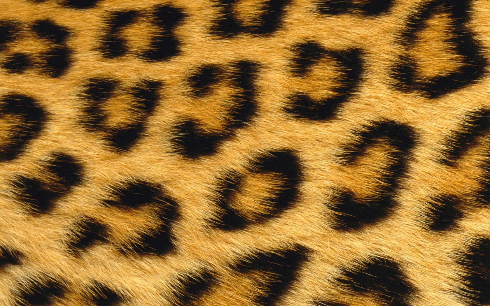 Free Leopard Skin 1680x1050 Wallpaper