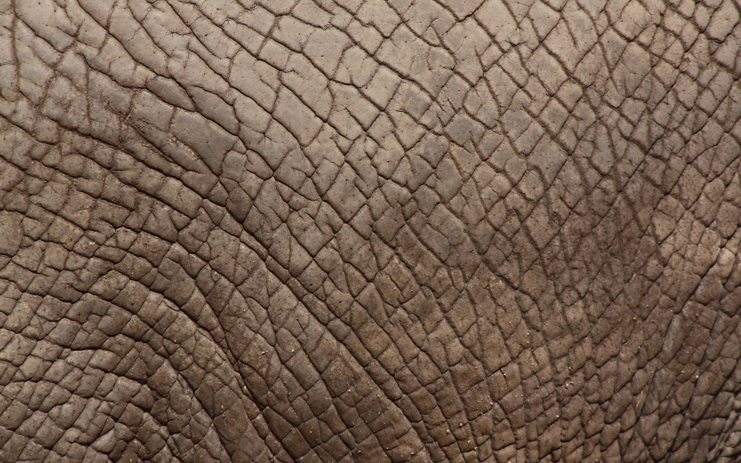 Skin Wallpaper; Skin Wallpaper ...