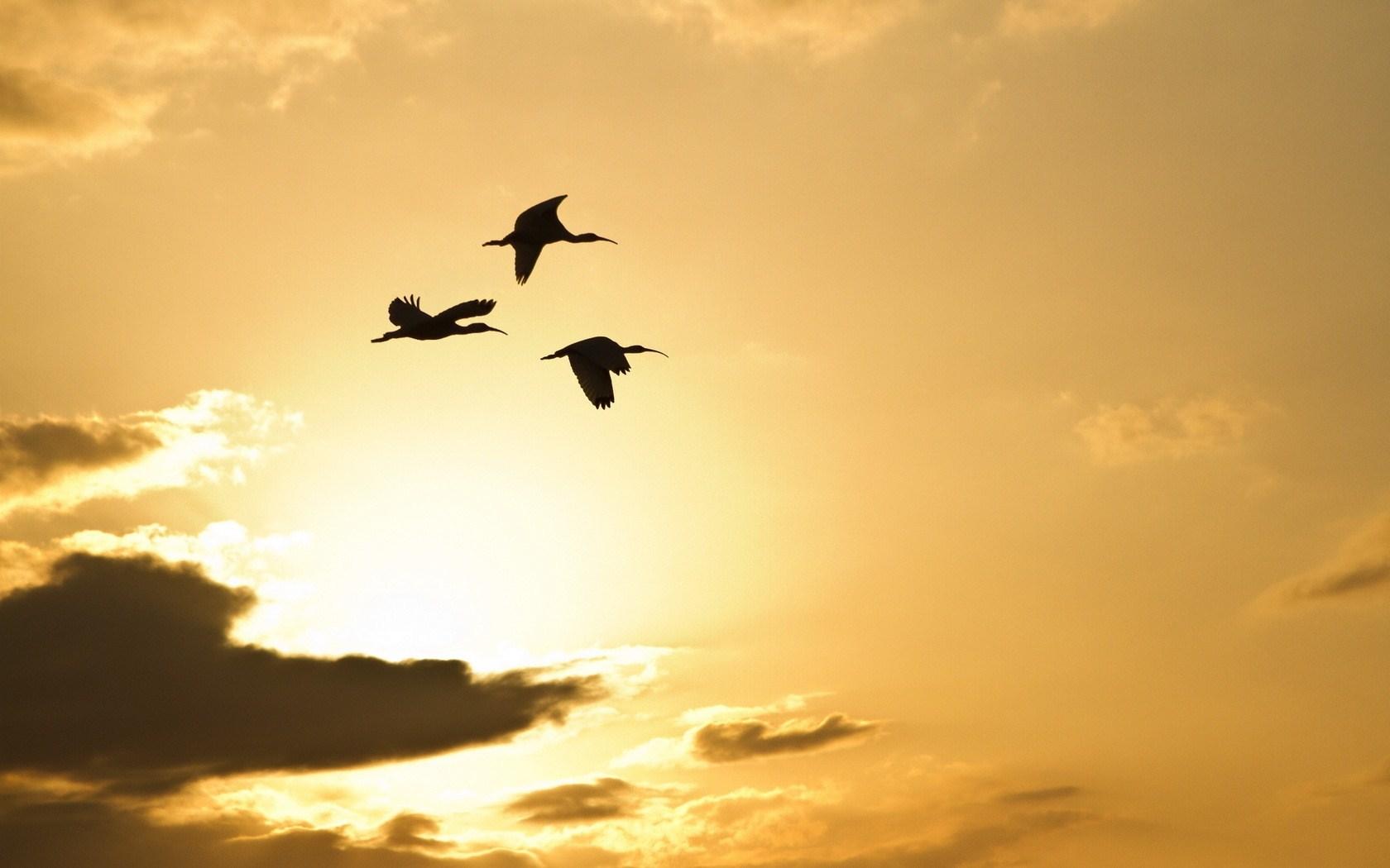 Sky Clouds Birds Storks