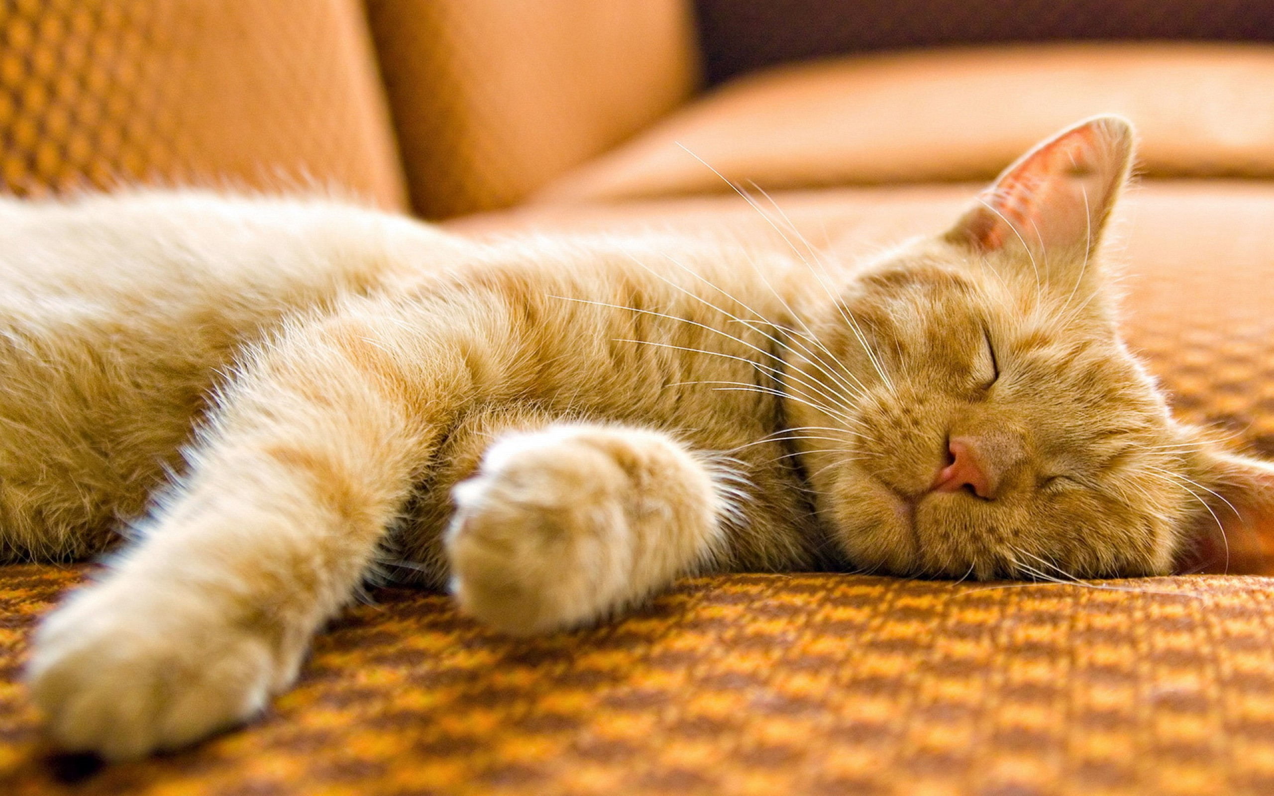 Beautiful Sleeping Cat Wallpaper