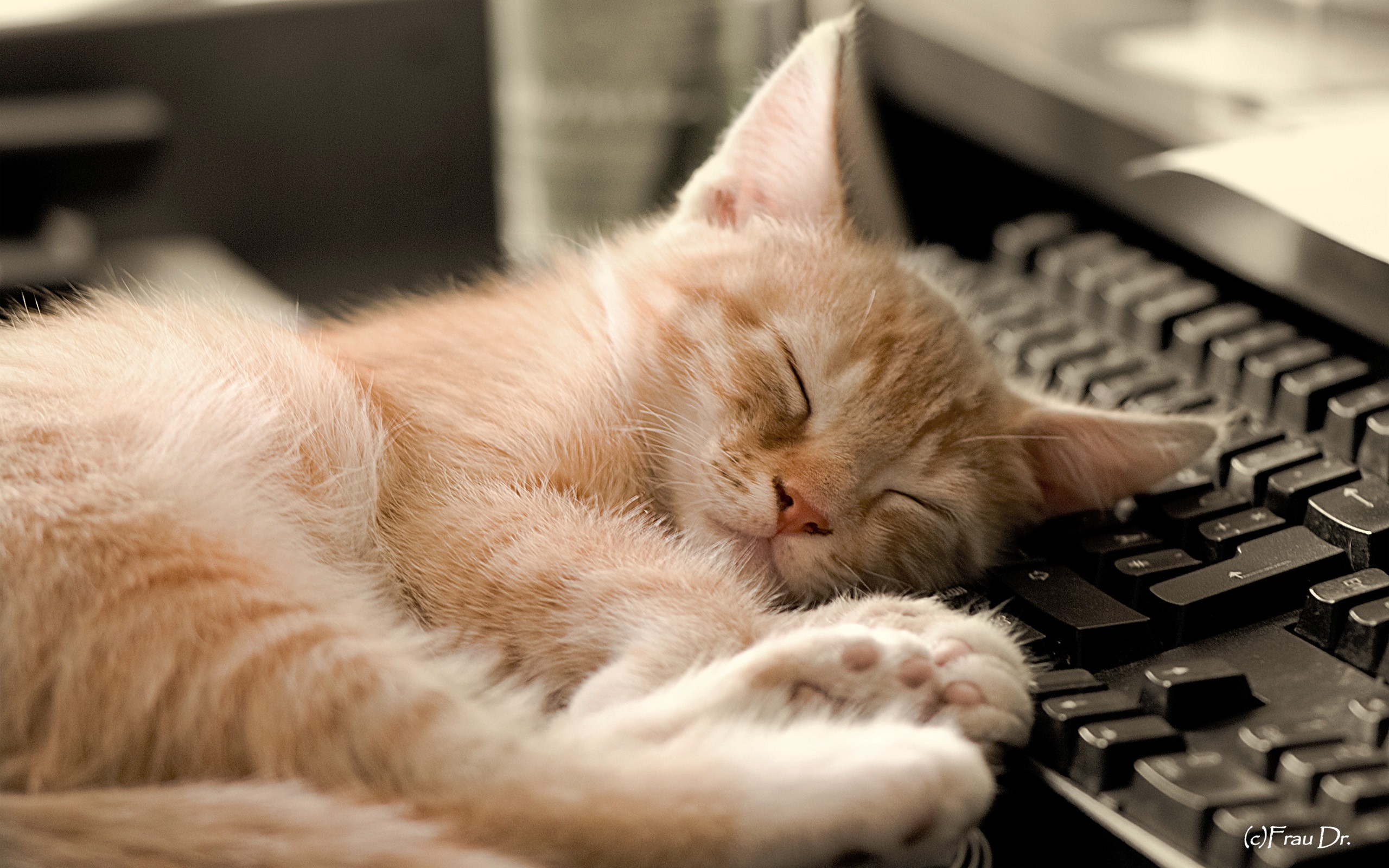 Sleeping Cat Wallpaper HD