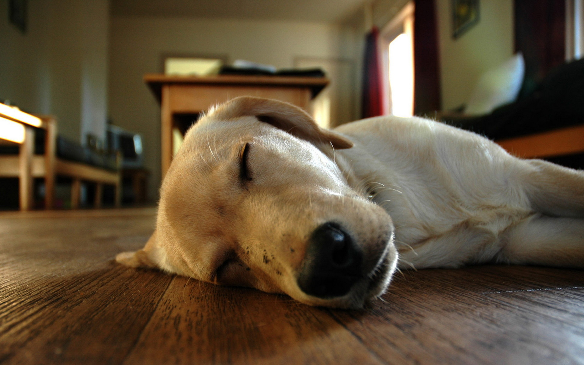 Sleeping Dog Wallpaper