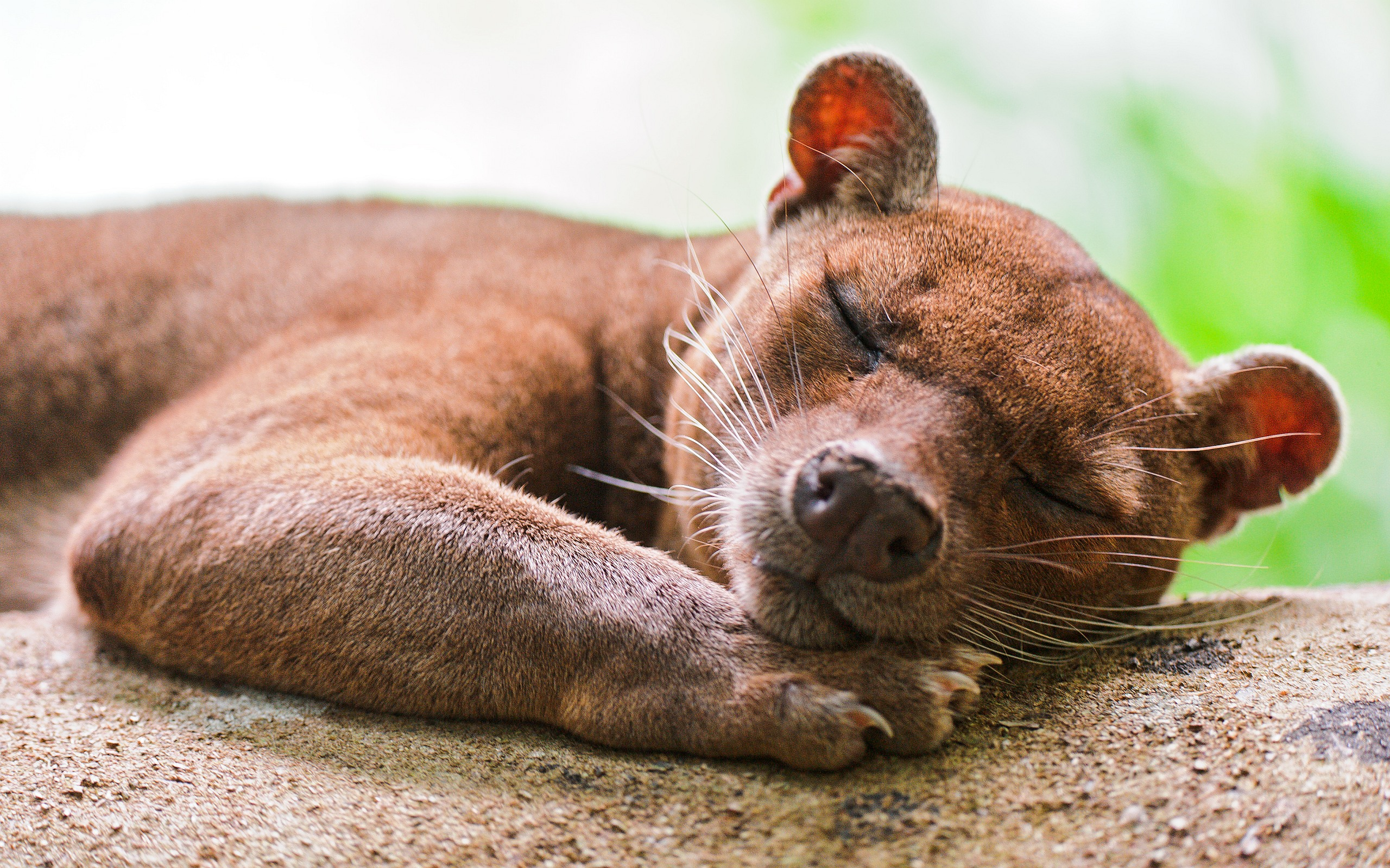 Sleeping Fossa