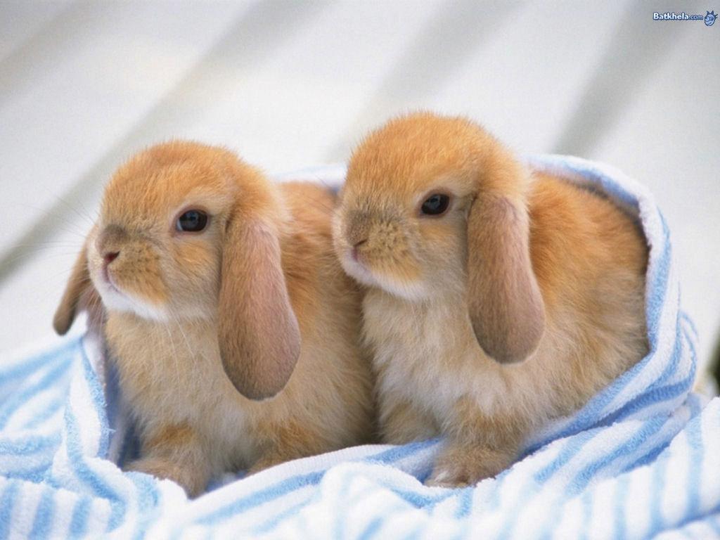 2 little cute baby bunnies