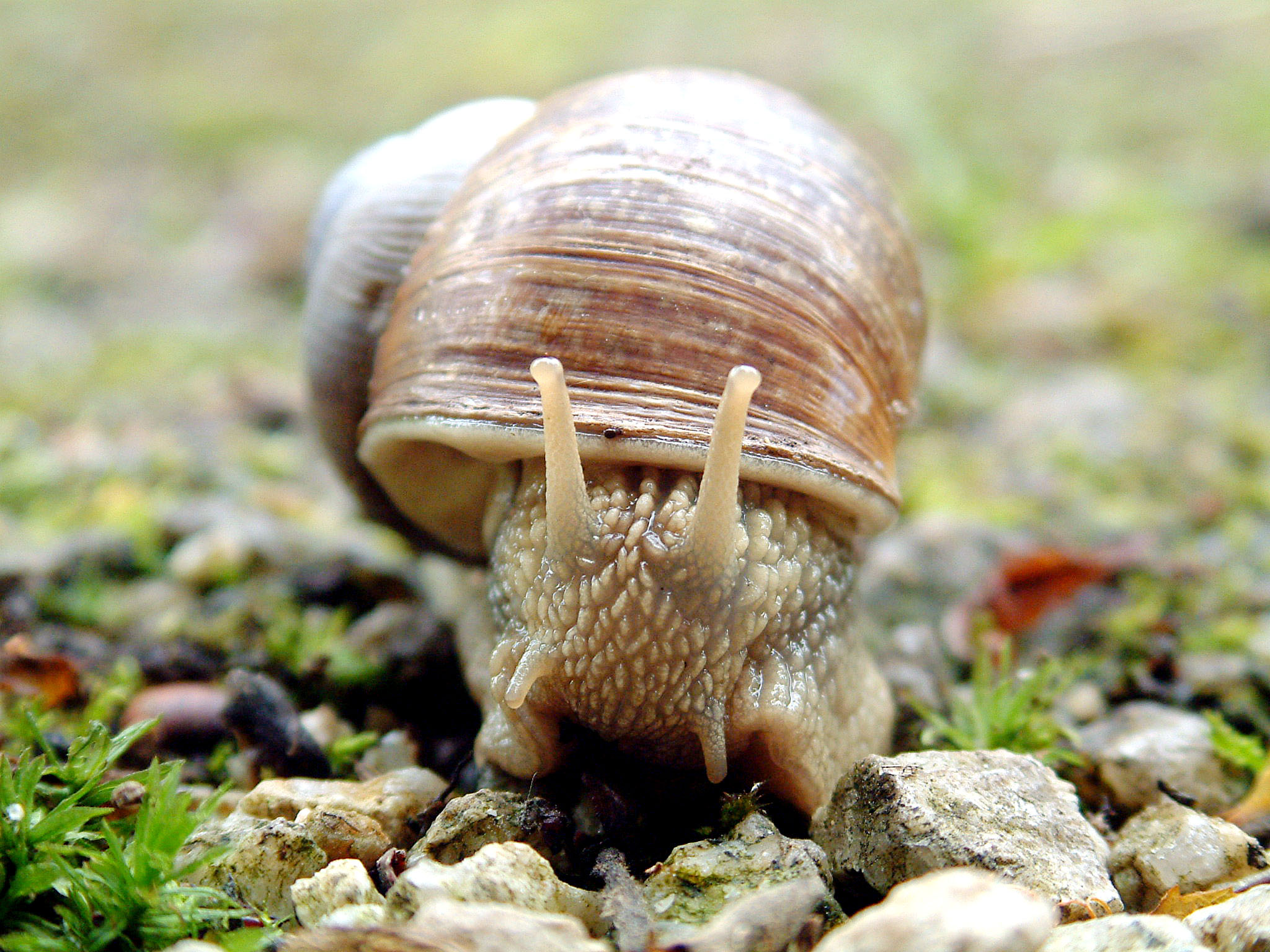 Snail Close-Up