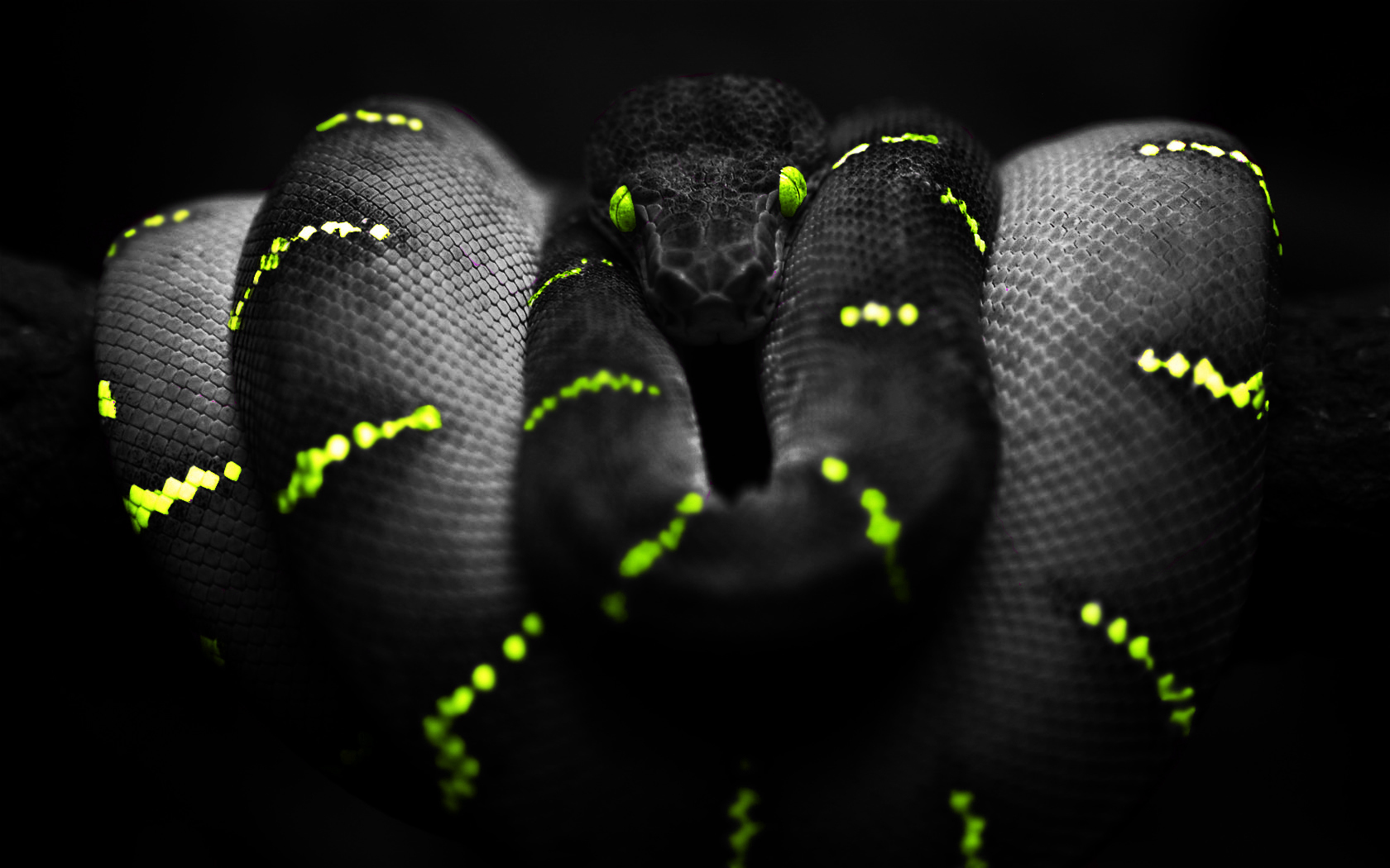 Snake Background