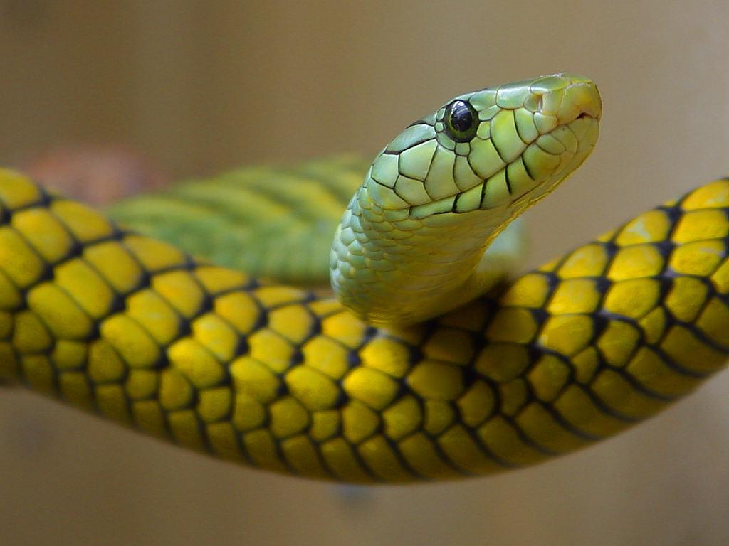 snake-reptile.jpg