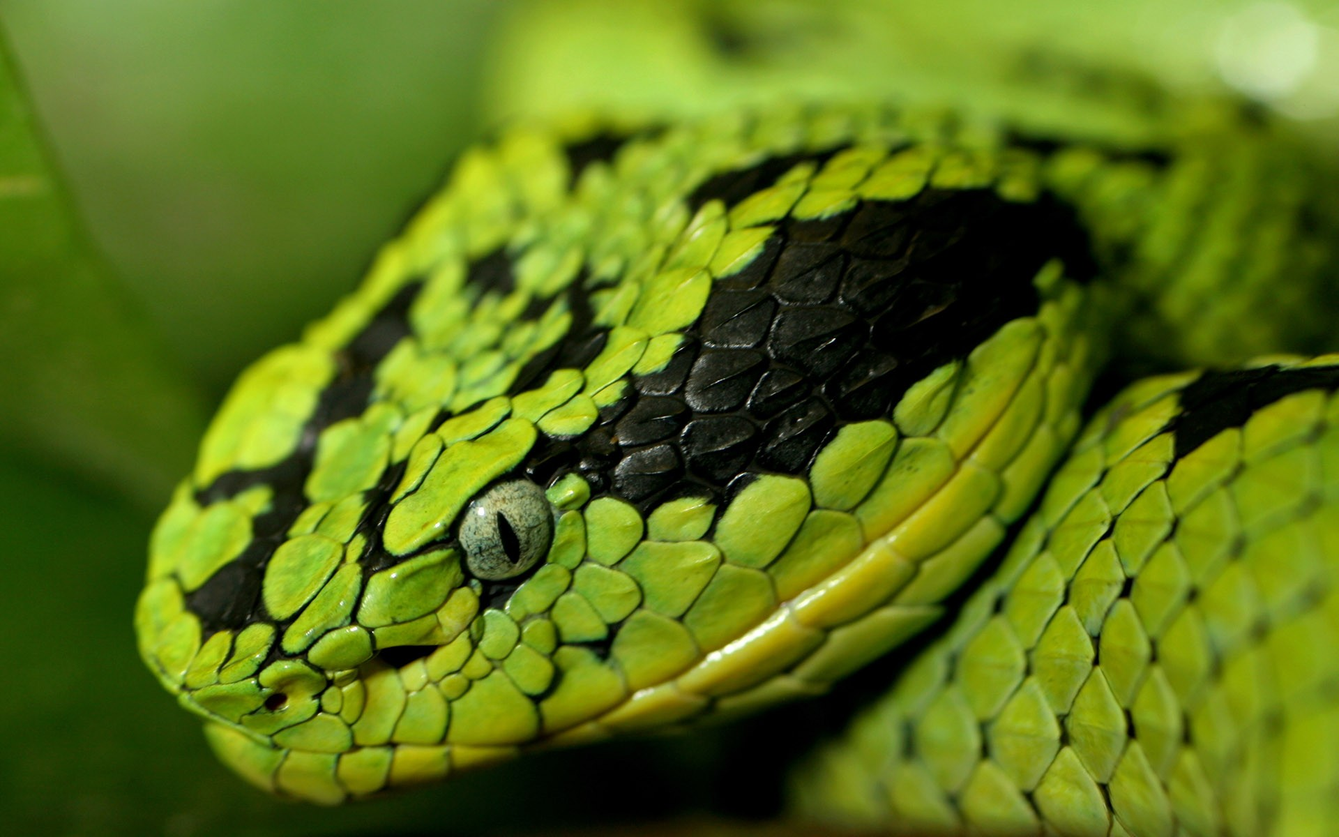 Close View snake picture