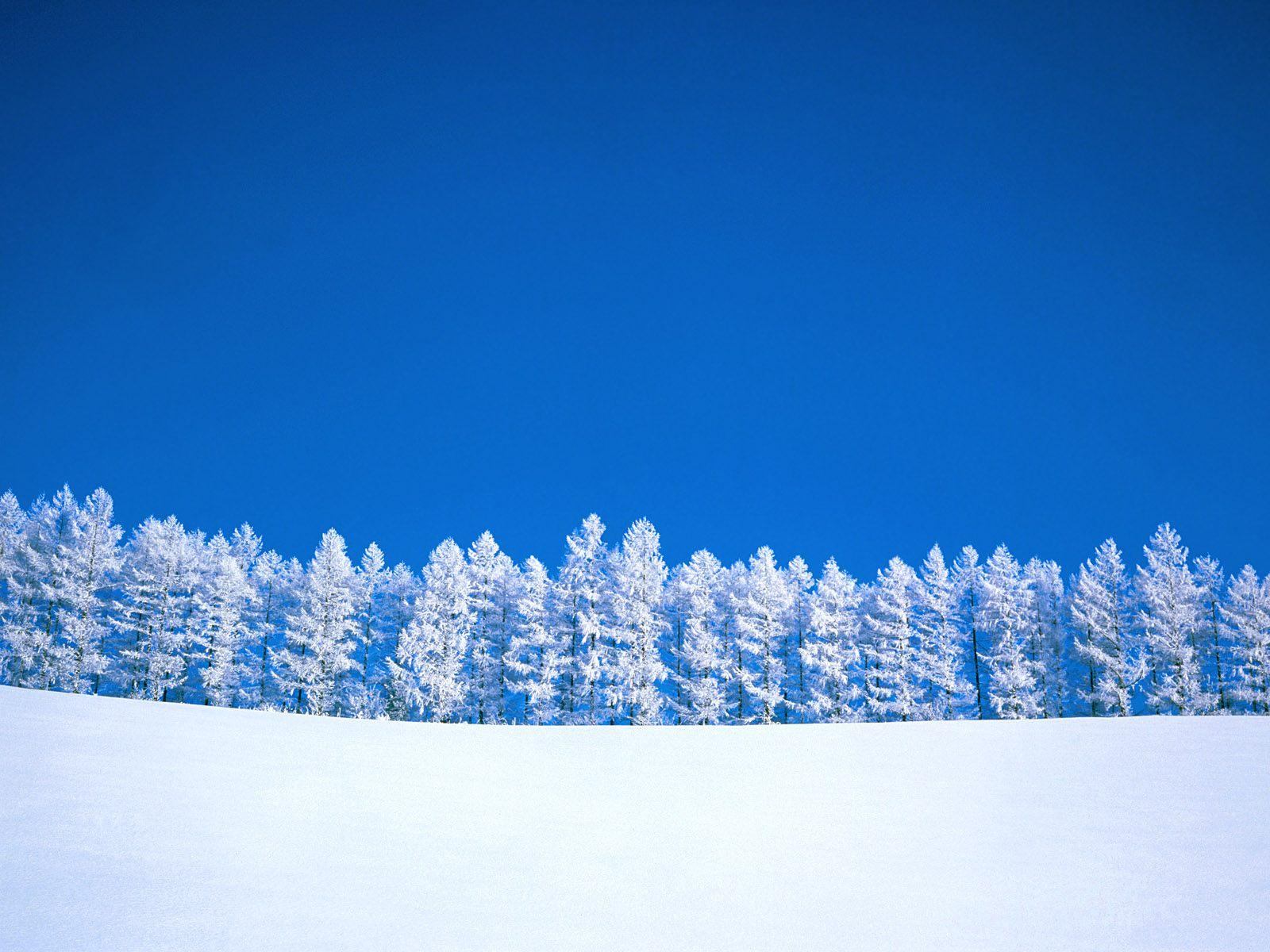 Winter in Snow Free Desktop Background Wallpaper Image