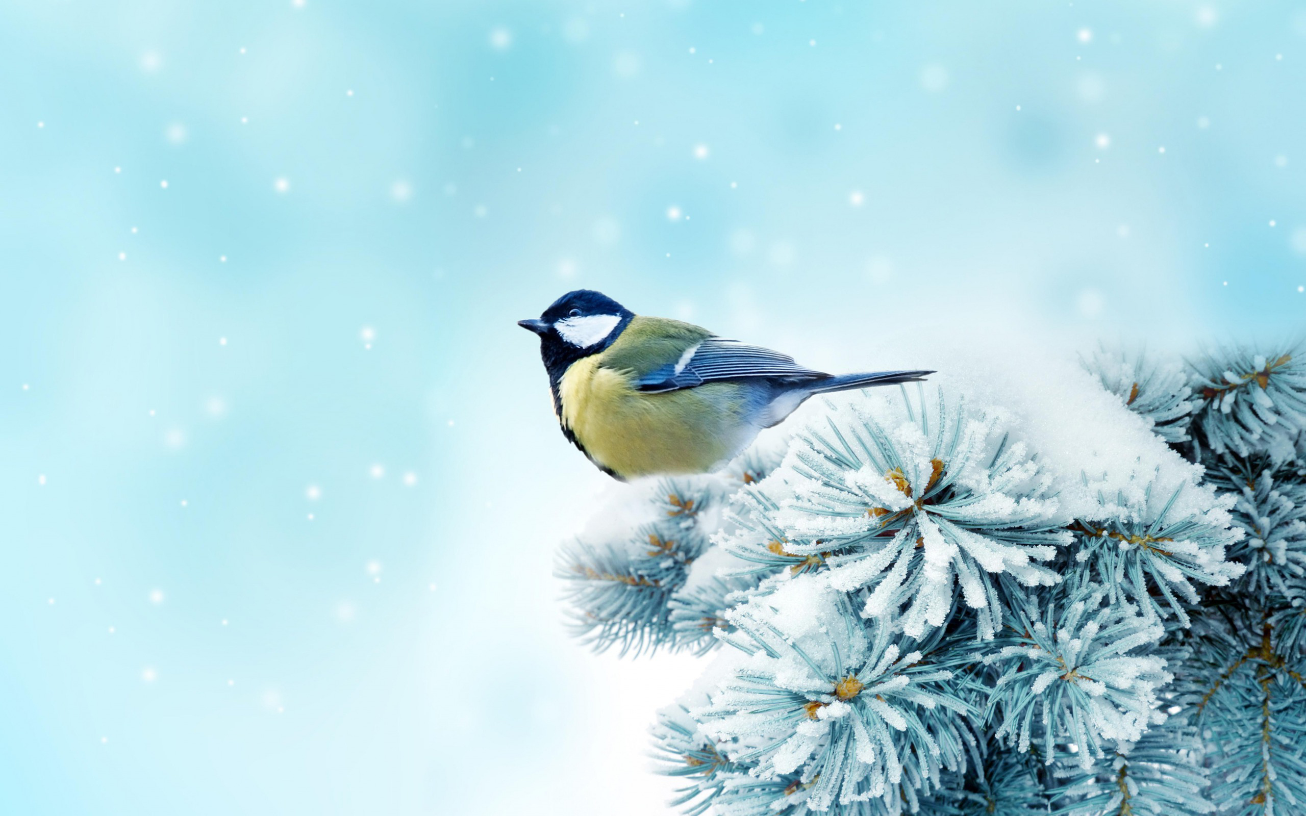 Snow Bird HD wallpapers