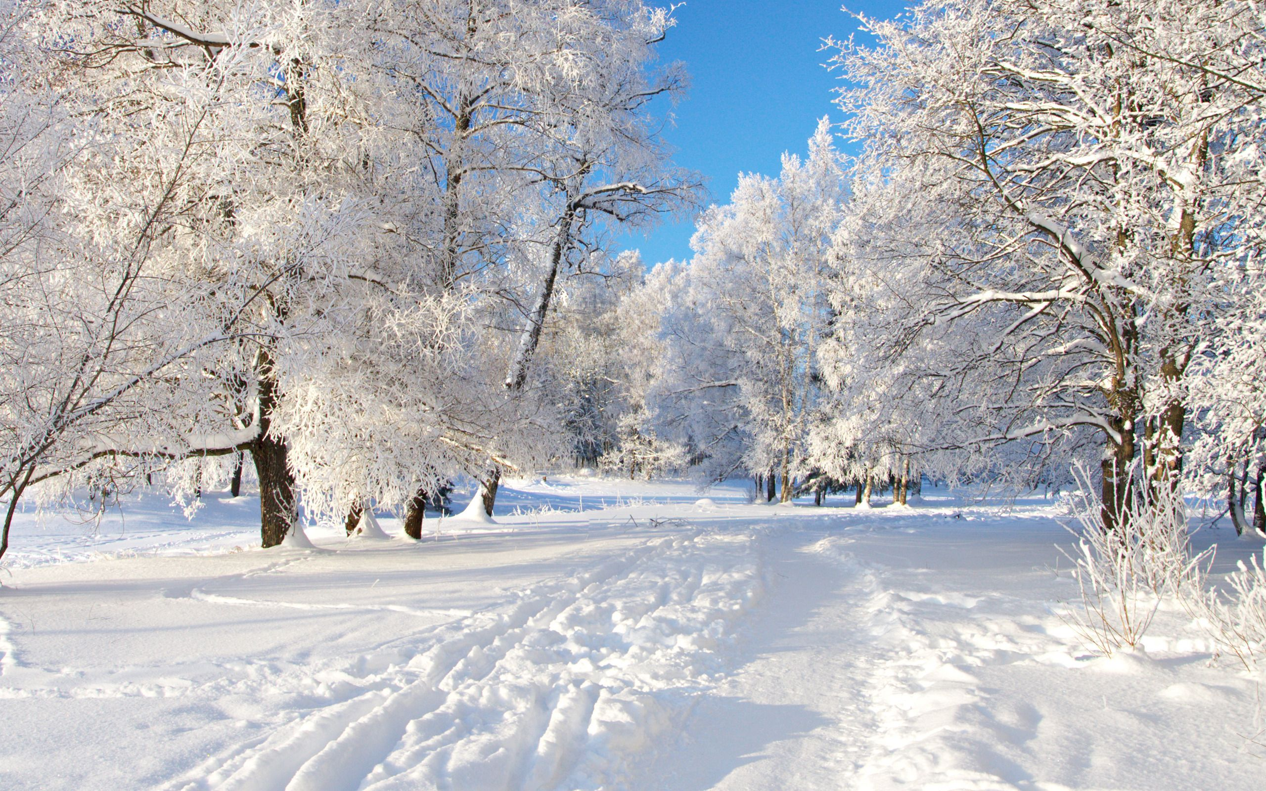 snowy nature wallpaper - photo #24