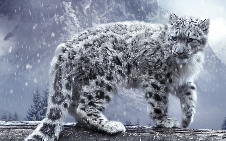 Animals Snow Leopard
