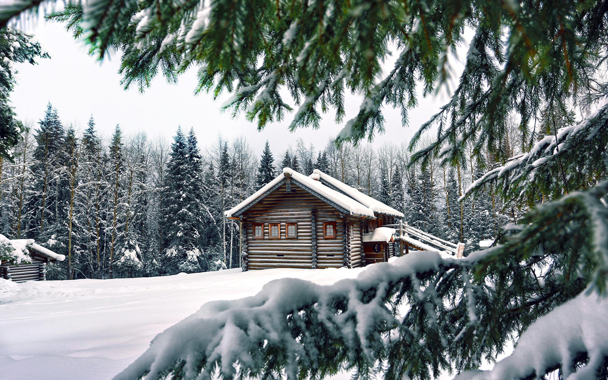 Snow Pine Background