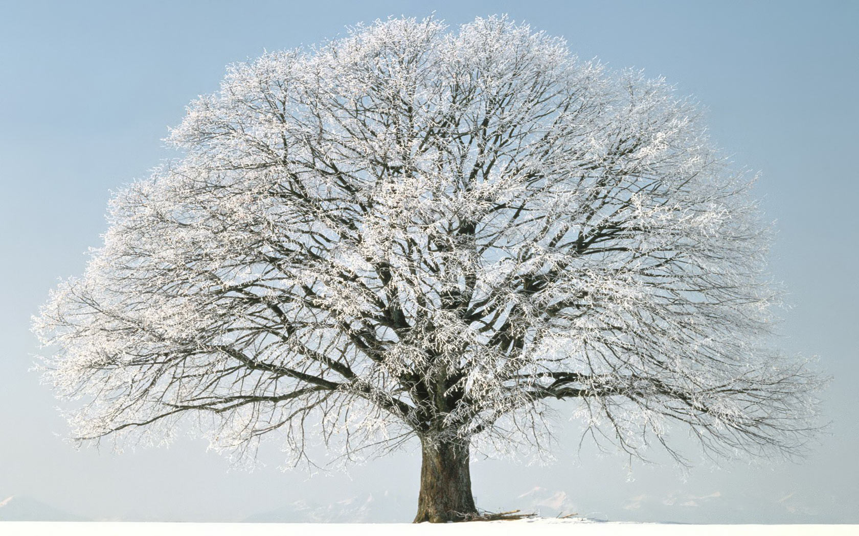 Snow tree winter