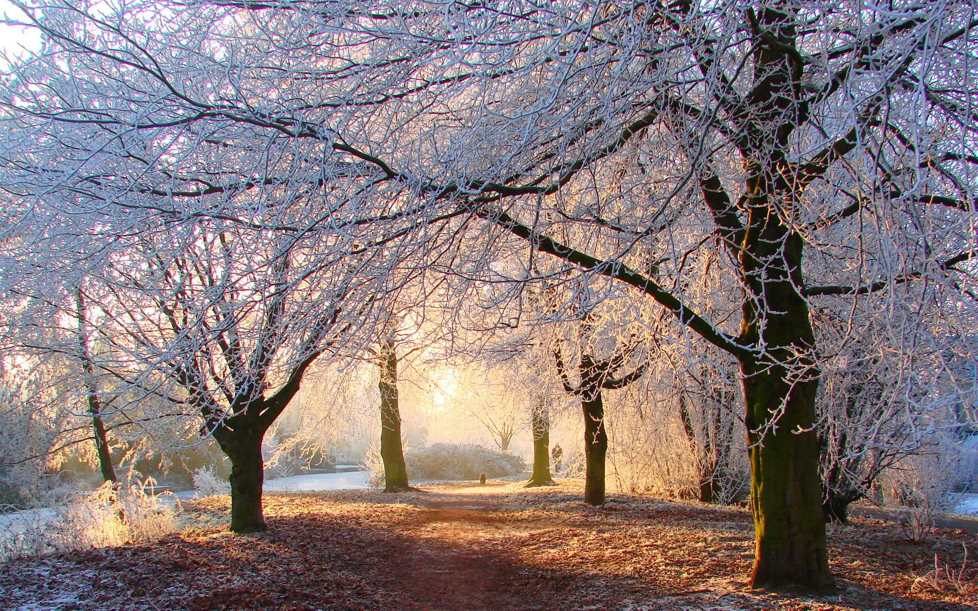 Amazing Snow Trees Wallpaper · Free Snow Trees Wallpaper ...