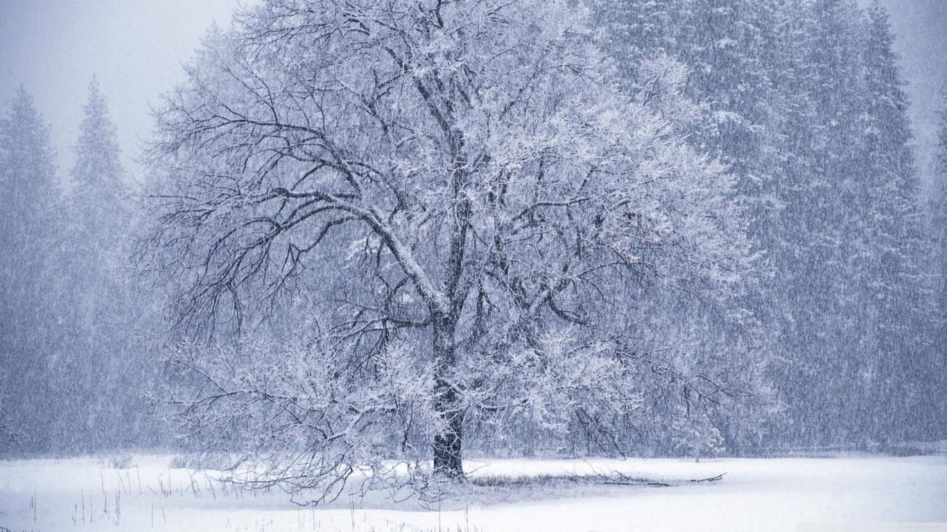 Snowflakes Falling HD
