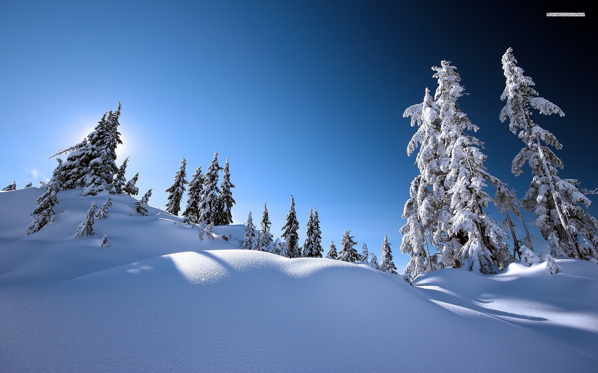 Snowy Trees 32381 1920x1080 px