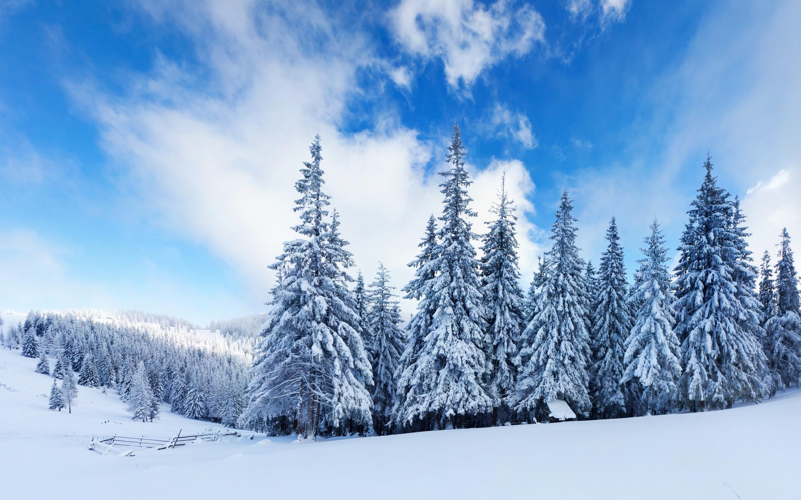 Snowy Trees Landscape