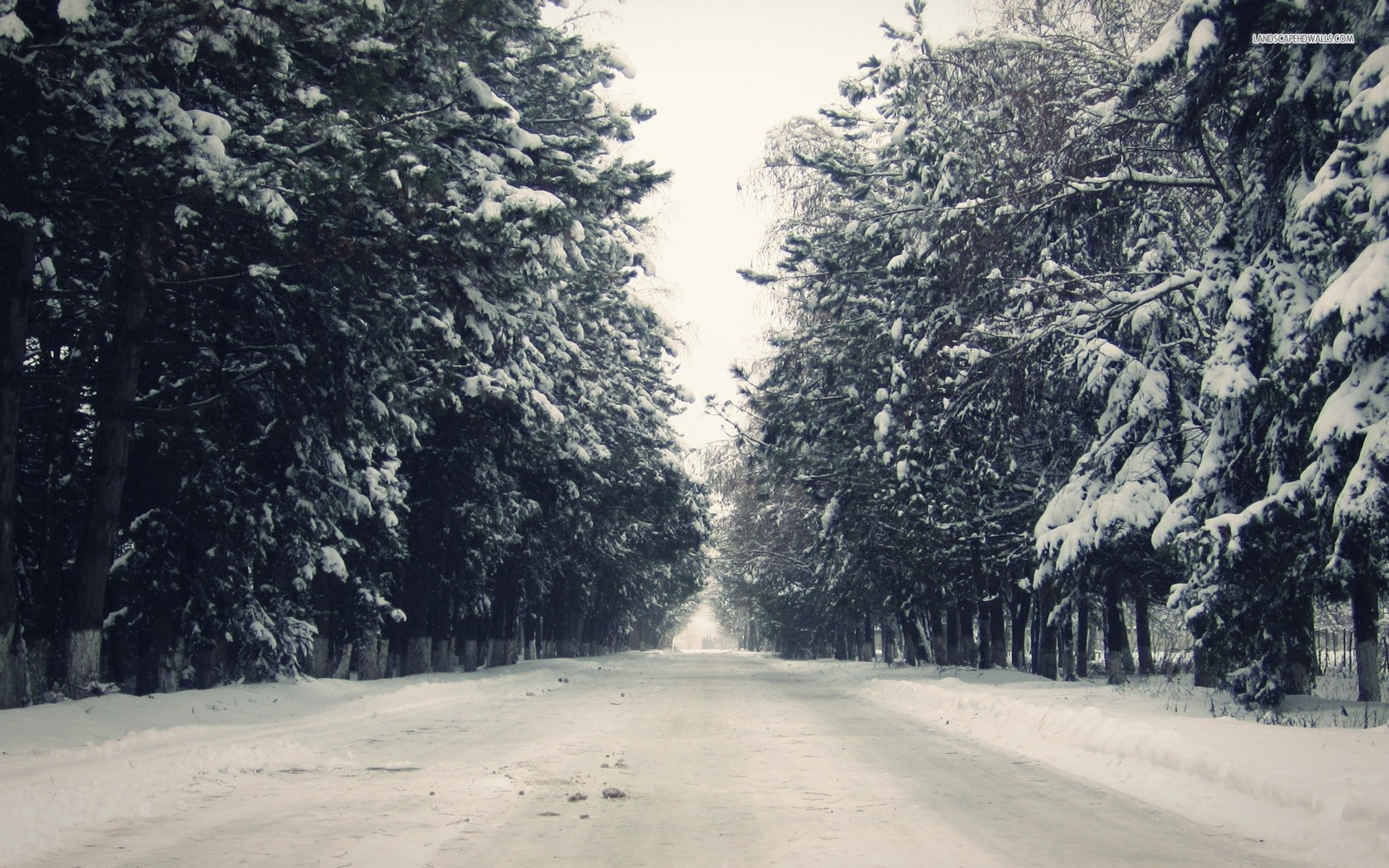 ... Snowy Road between the Trees wallpaper 1366x768 ...