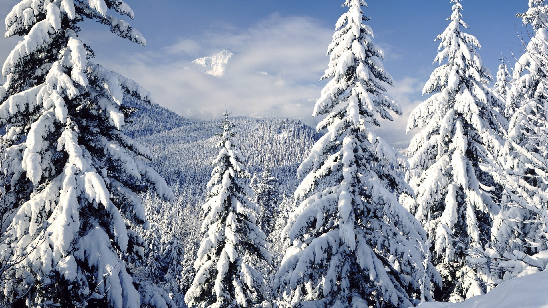 ... Snowy trees wallpaper 1920x1080 ...