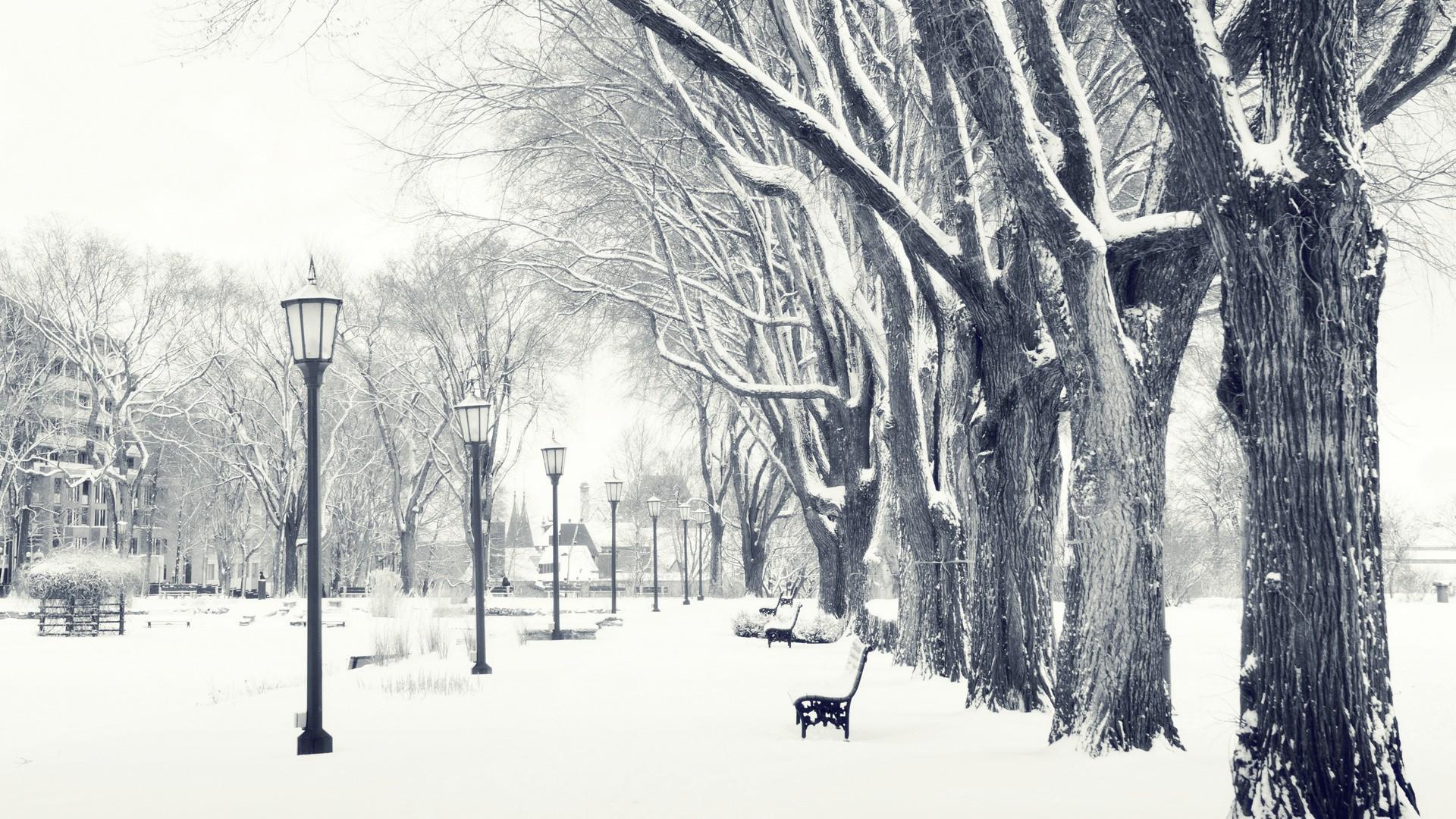 Snowy Trees Wallpaper HD