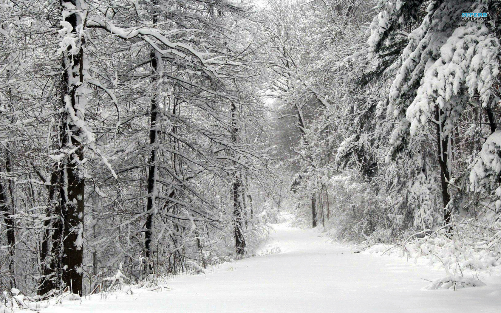 Snowy Road in the Forest wallpaper 1680x1050
