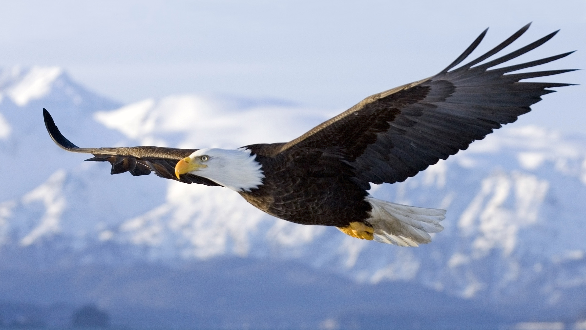 Soaring Wallpaper HD